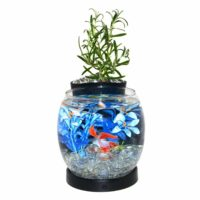 """Elive Betta Bowl and Planter """"Black"""""""