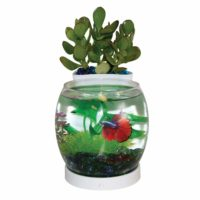 """Elive Betta Bowl and Planter """"White"""""""