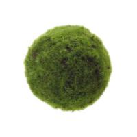 PLANT MOSS BALL